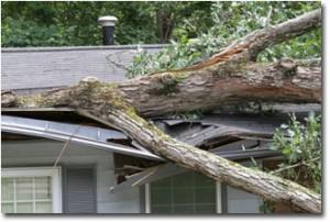 wind damage storm restoration
